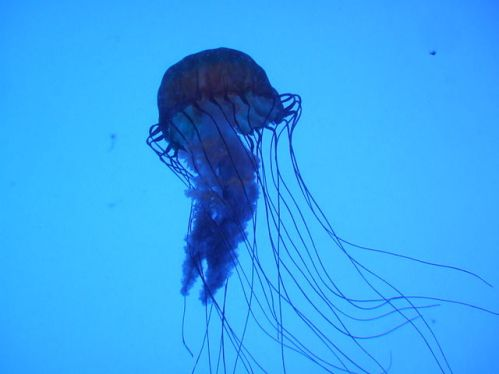 boxjellyfish