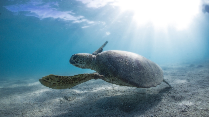 The innovative technology that's saving seaturtles.