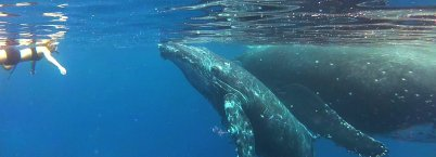 Coming face to face with one of the oceans' giants.