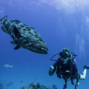 Diving with a fish the same size as you is always a thrilling experience.