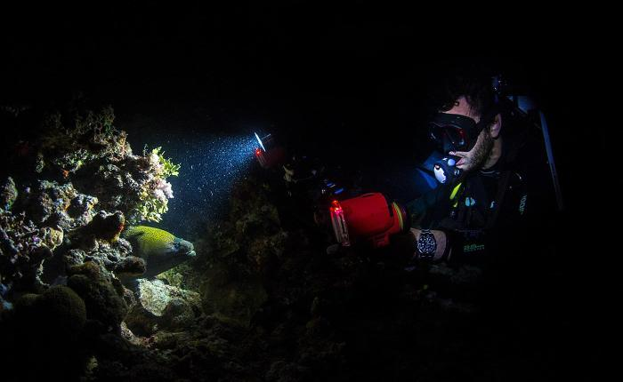 10 tips for unreal live aboard diving at night.