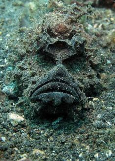 See why it's so hard to distinguish the stone fish from its surroundings?!