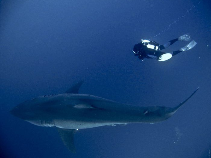 Why shark nets are the most indiscriminate killer of endangered marinelife.