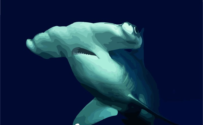 The big reason behind why the hammerhead shark has its hammer.