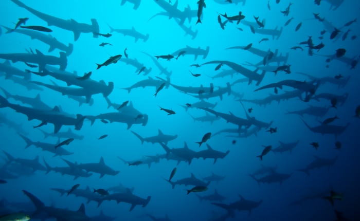 The top 3 live aboard diving trips for shark lovers.
