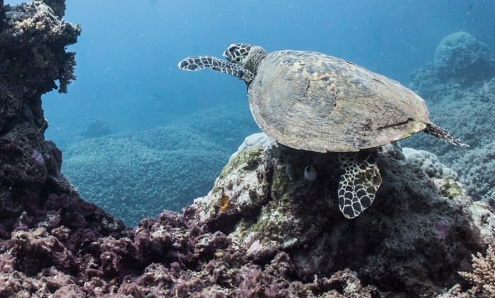 Scientists have just discovered a glow in the dark seaturtle.
