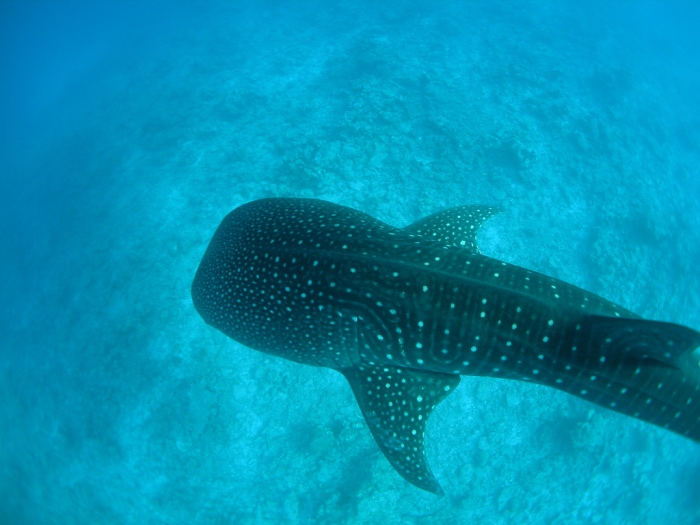 Live aboard diving in Mexico: you're guaranteed to have a whale of atime.