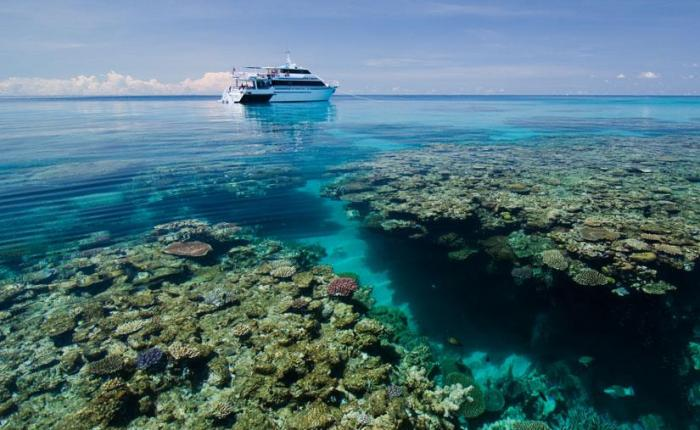 Top three live aboard trips for divers on a budget.