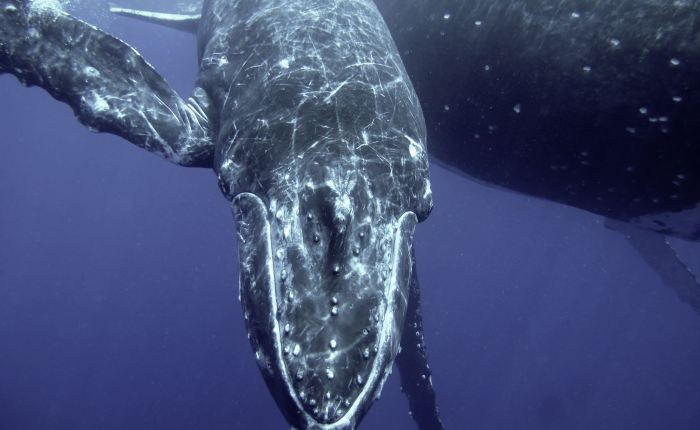 WATCH: Incredible footage of mother whale and dolphin with their babies.
