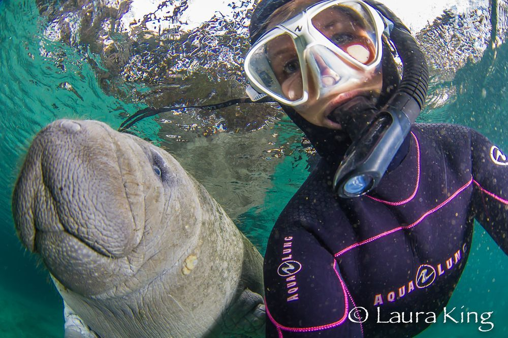 Underwater selfie with a manatee