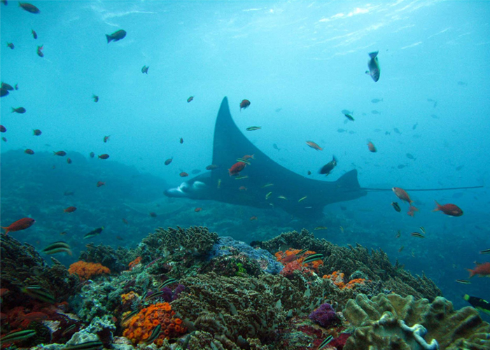 Manta Alley, Komodo National Park