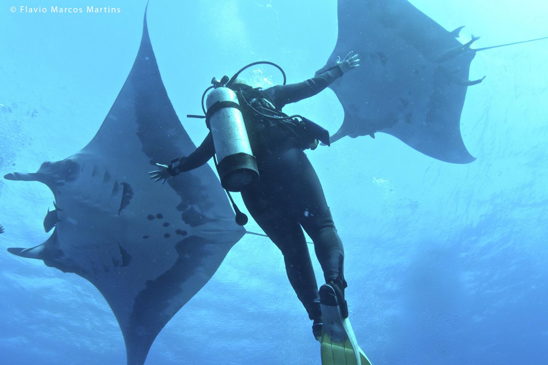 Manta diving